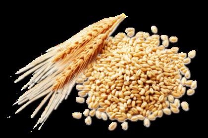 Card image wheat-germ